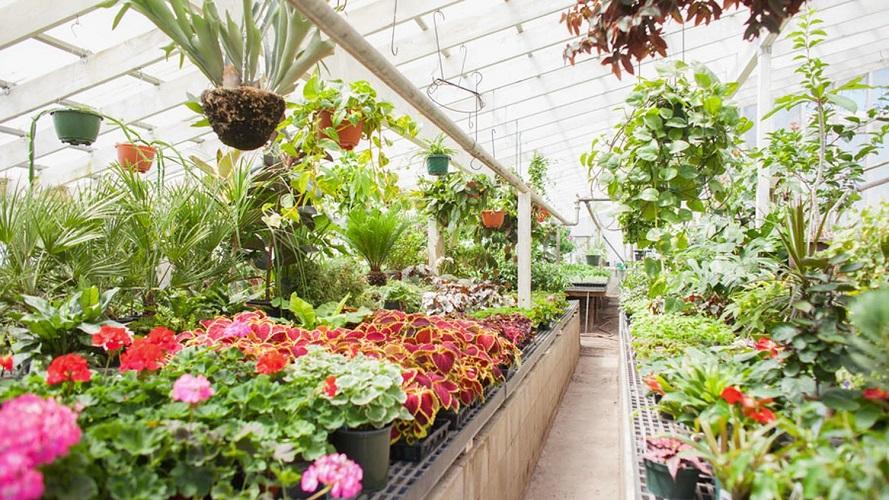 Long Island plant nursery